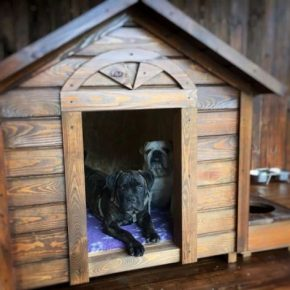 Инструкция, как сделать будку для собаки своими руками: мастер-класс по изготовлению. 165 фото идей, чертежи и советы по сборке