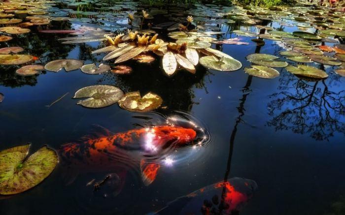 Каким должен быть водоем для разведения рыбы