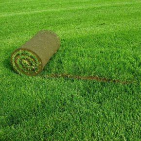 Рулонный газон: мастер-класс по укладке и советы при выборе. Особенности применения рулонного газона в ландшафтном дизайне (175 фото)