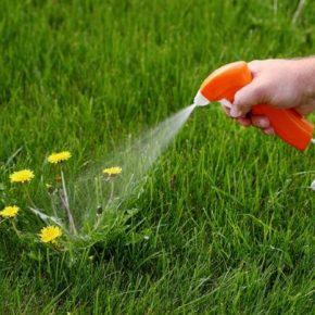 Средство от сорняков: советы по выбору современного метода борьбы. 100 фото проверенных способов борьбы с сорняками