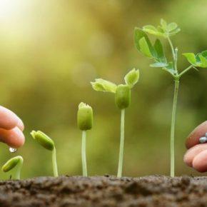 Чем лучше удобрить землю: обзор лучших способов и методов удобрения разных видов почв (инструкция + 110 фото)