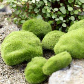 Декоративный мох для сада: разведение и применение в ландшафтном дизайне. Условия высадки и разновидности мха (135 фото)