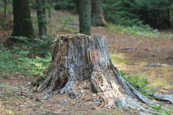Как быстро избавиться от пня без корчевания, различные способы убрать пеньки деревьев