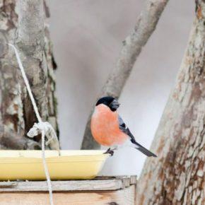 Кормушка для птиц: как сделать оригинальную и красивую кормушку своими руками (145 фото + видео)