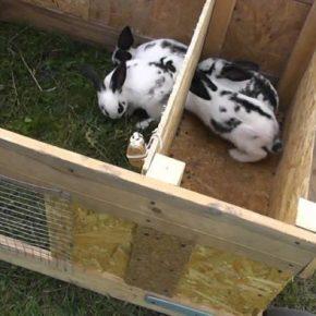 Крольчатник своими руками: схемы, размеры, чертежи и пошаговая инструкция постройки загона для кролей (115 фото)