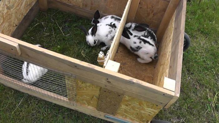 Как сделать клетку для кроликов своими руками: инструкция с фото