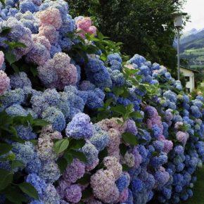 Кустарники для дачи – советы по выбору декоративных кустарников. 150 фото идей применения кустарника в ландшафтном дизайне