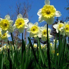 Лучшие цветы для дачи: 120 фото идей применения в дизайне. Примеры размещения клумб и описание цветов