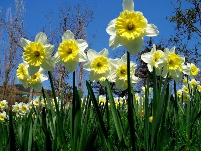 Цветы на участке дома
