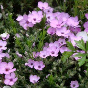 Многолетние цветы: лучшие сорта неприхотливых растений и идеи по их использованию в ландшафтном дизайне сада и участка (120 фото)