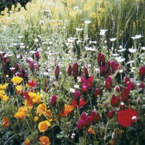 Неприхотливые цветы для сада – идеи применения и правила выращивания многолетних и однолетних растений не требующих особого ухода (135 фото)