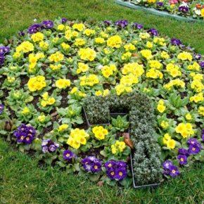 Низкорослые цветы – описание, виды, советы по посадке и уходу. Особенности выращивания и составление композиций (175 фото-идей)