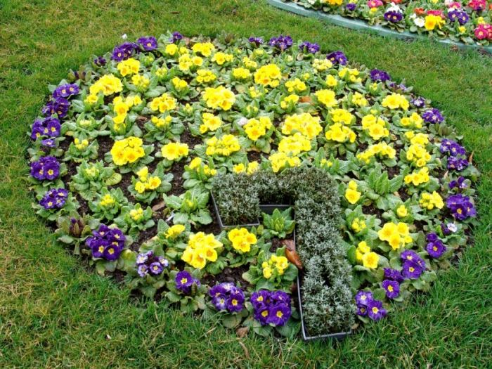 Голубые низкорослые цветы