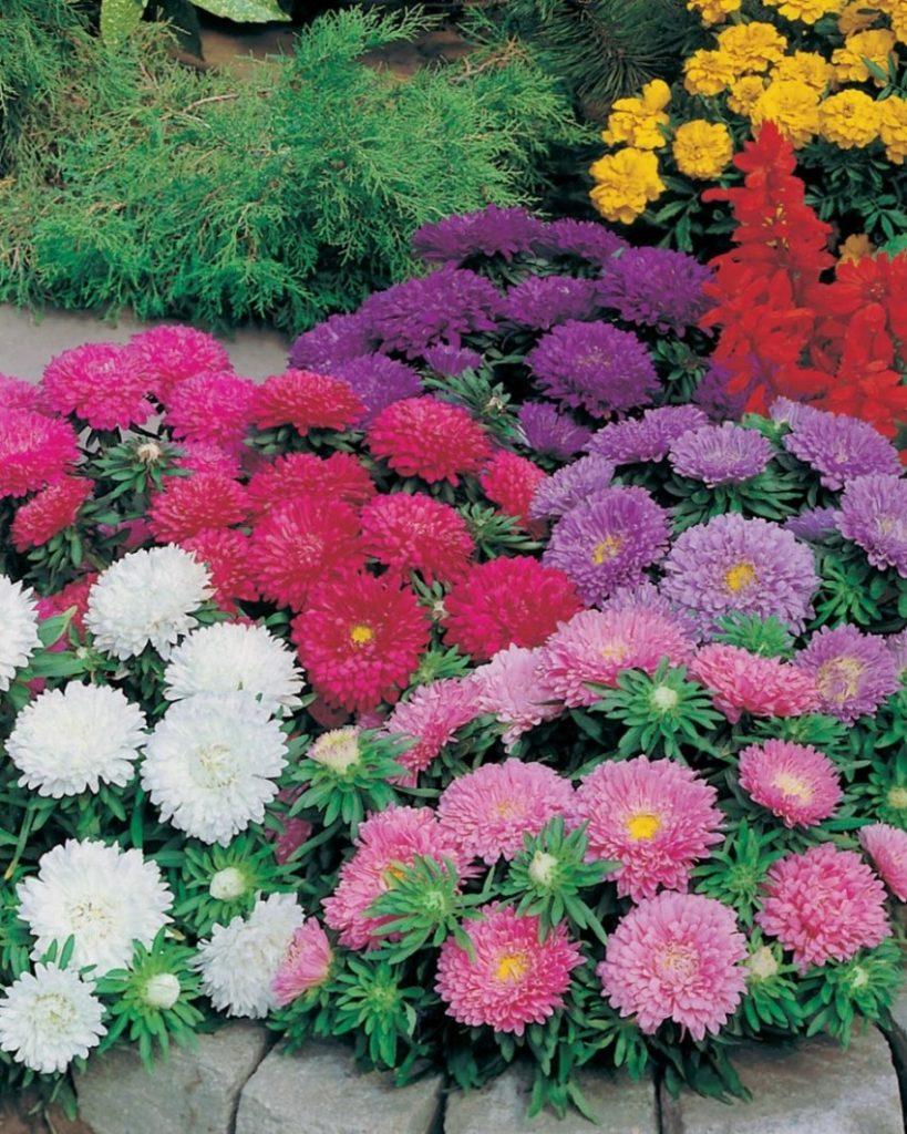 картинки многолетних уличных цветов них или