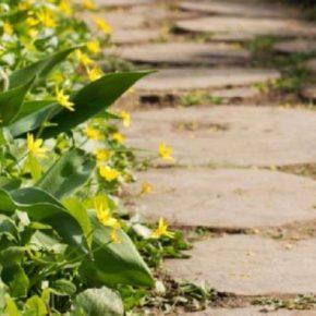 Садовые дорожки: оригинальные идеи и универсальные варианты оформления. Пошаговая инструкция подбора форм и размеров (145 фото)