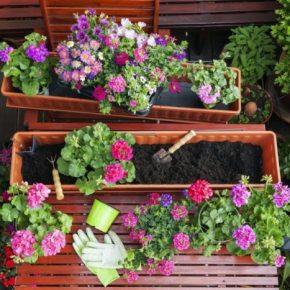 Саженцы цветов: советы по выбору и обзор вариантов посадки. Правила обработки и ухода за саженцами (135 фото)