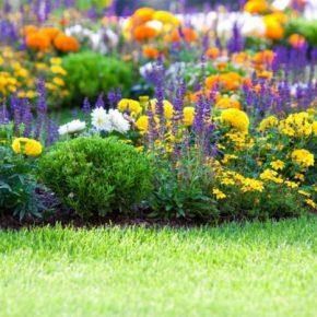 Цветы для клумбы цветущие все лето: схемы и идеи по выбору низкорастущих и многолетних цветов для сада и участка (125 фото)