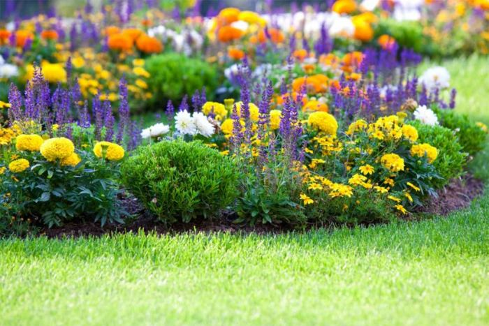 Растения для клумб без цветов