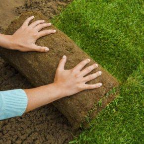 Трава для газона: декоративные сорта, советы по укладке и идеи применения газона в ландшафтном дизайне (160 фото)