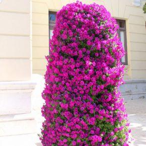 Вертикальная клумба своими руками: простые варианты создания и советы по выбору цветов и растений (155 фото)