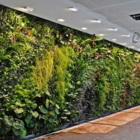 Вертикальное озеленение: 145 фото интересных конструкций и идеи применения в дизайне сада и интерьера