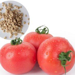 Бизнес на помидорах: как правильно выбирать семена, способные дать хороший урожай в теплице