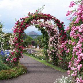 Быстрорастущие вьющиеся растения: 130 фото лучших видов растений для забора, арок и создания живой ограды