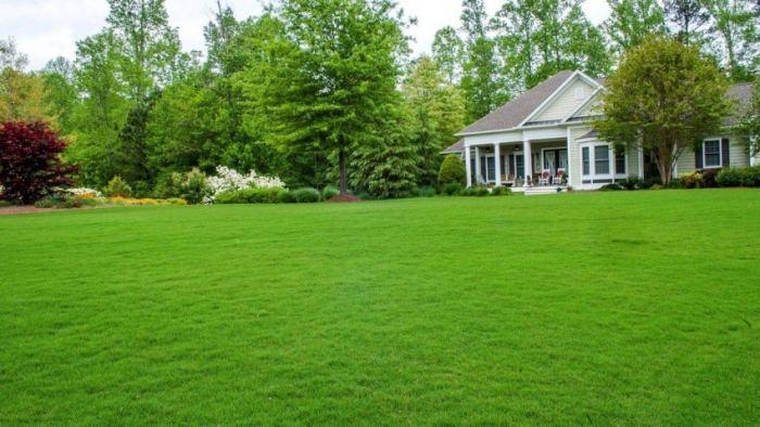 lawn1-e1463985318828 Ландшафный дизайн - Мебель и Дизайн - Самара - Таблица категорий | Доска  объявлений
