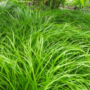 Секреты хорошего урожая: какие удобрения стоит вносить на участке осенью