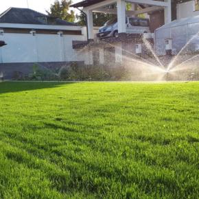 10 Лучших видов газонной травы для посадки на даче